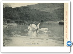 Swans, Hotel Bay - Ardlui Hotel Head of Loch Lomond